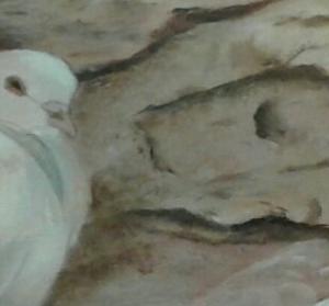 detail duif in klaagmuur